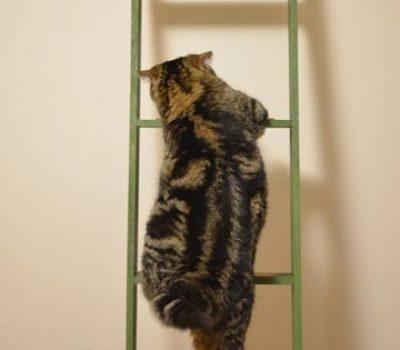 11 IDEE per decorare con le scale vintage