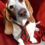 11 MODI per riciclare le cravatte vintage